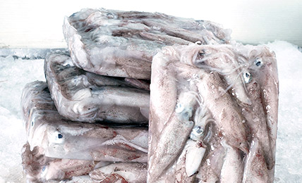 Shatterpack squid